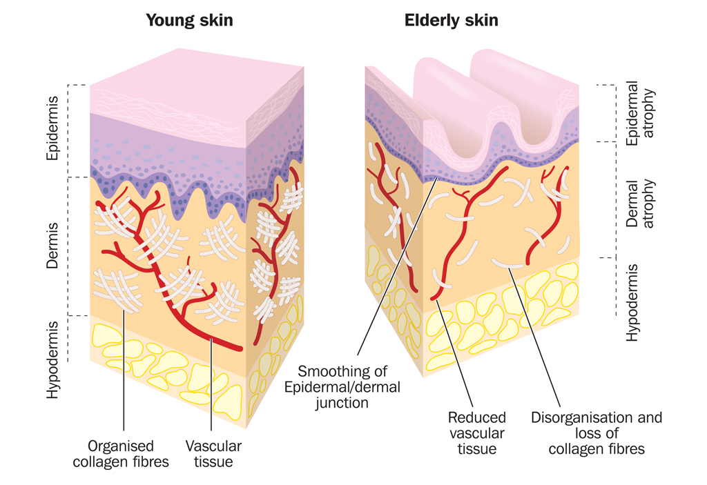 Skin Laser, Ultrasound, and Radiofrequency Treatments